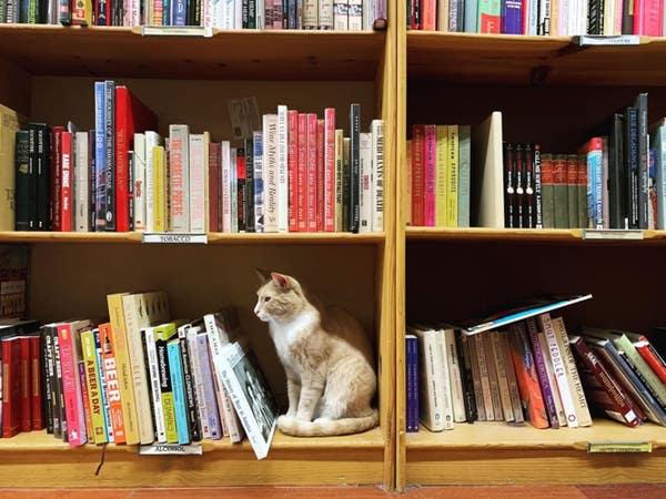 Iliad Bookshop