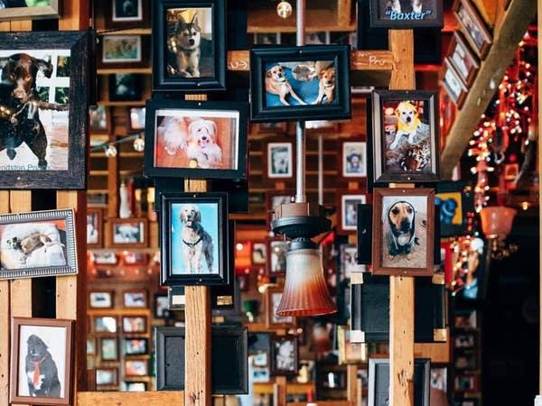 The Blue Dog Beer Tavern