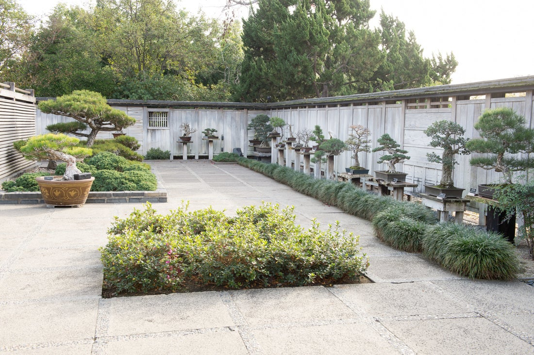 GSBF Bonsai Collection at the Huntington Library | Photo: GSBF Collection at the Huntington Library