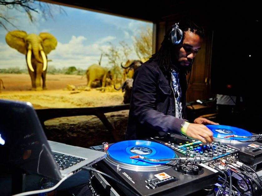 DJ Jedi on the decks in the African Mammal Hall at First Fridays   Photo: Natural History Museum, Facebook