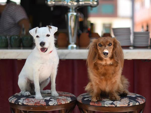 Django and Chloe enjoying Happy Hour at Simonette   Photo: @django_and_chloe, Instagram