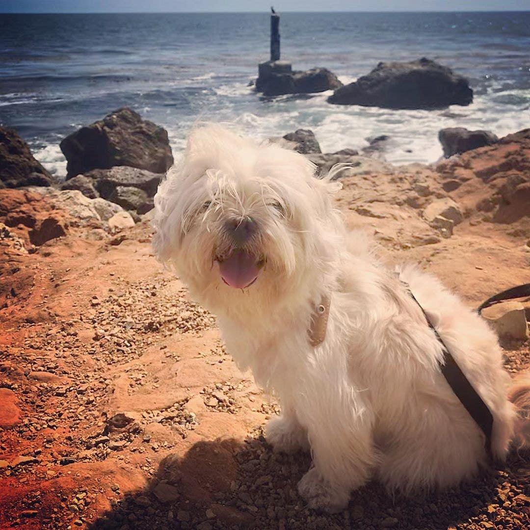 Dog on the beach at Terranea Resort