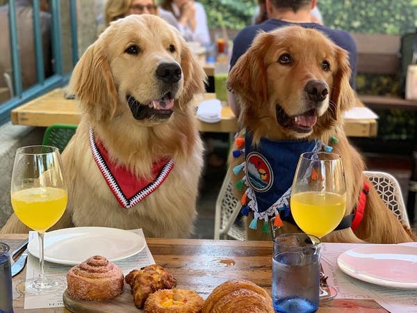 Dogs enjoying brunch at The Rose Venice