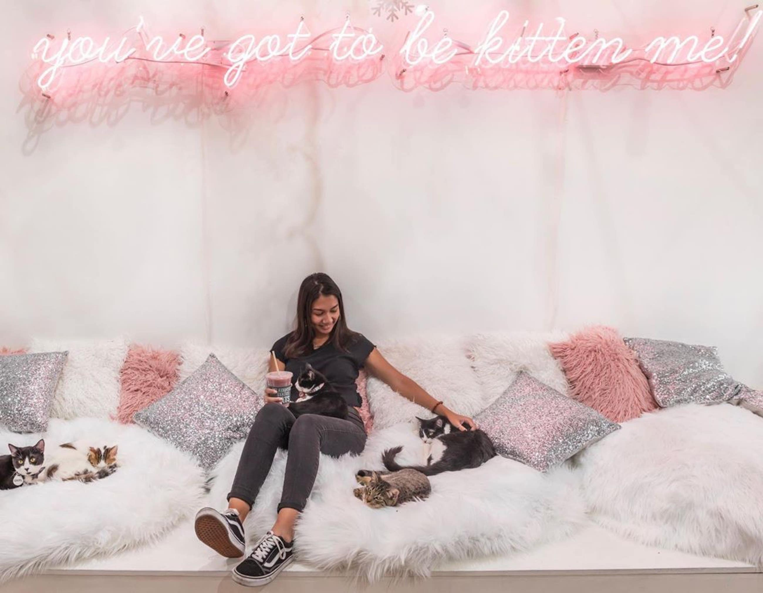 Cat beds at Crumbs & Whiskers Los Angeles