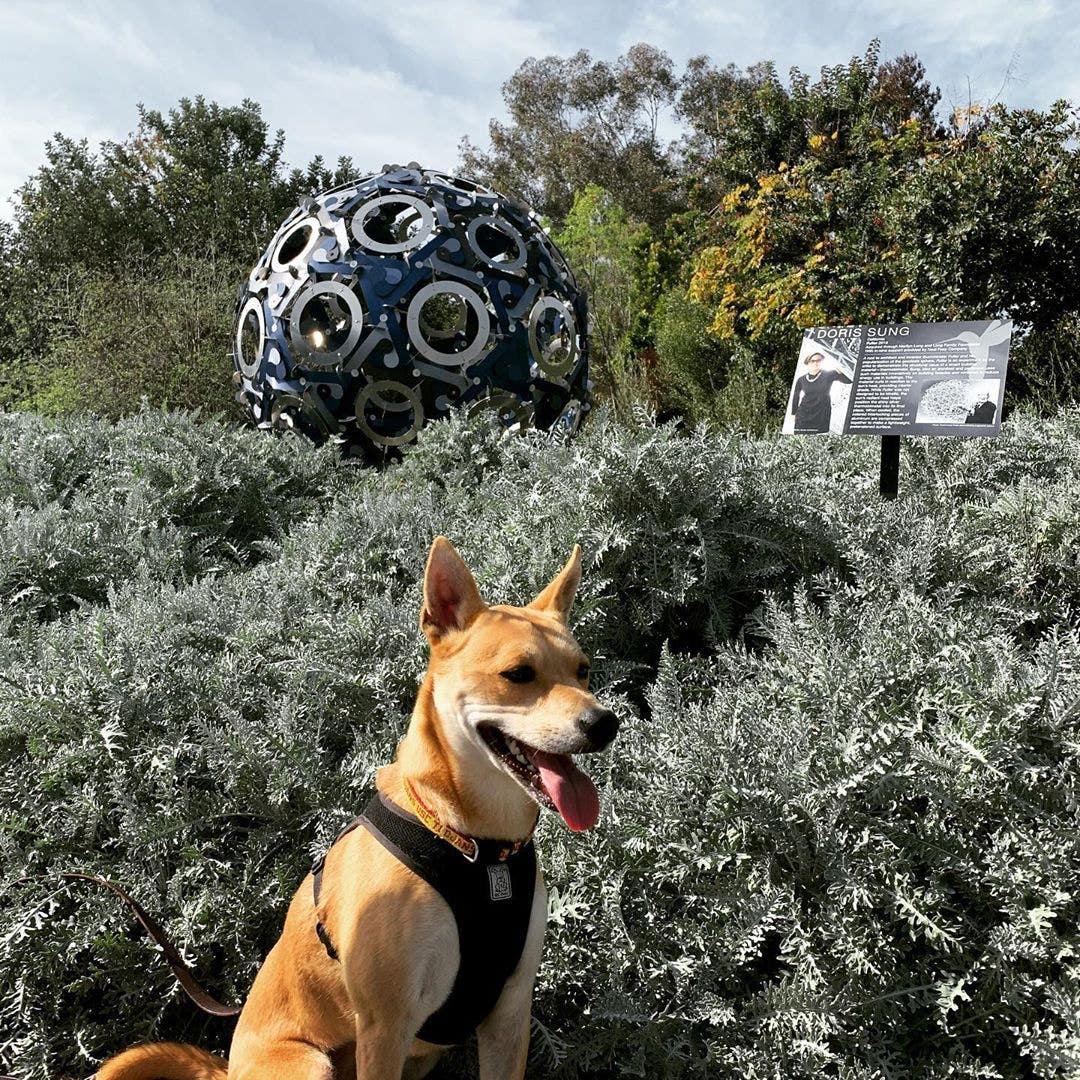 South Coast Botanic Garden Dog Hours