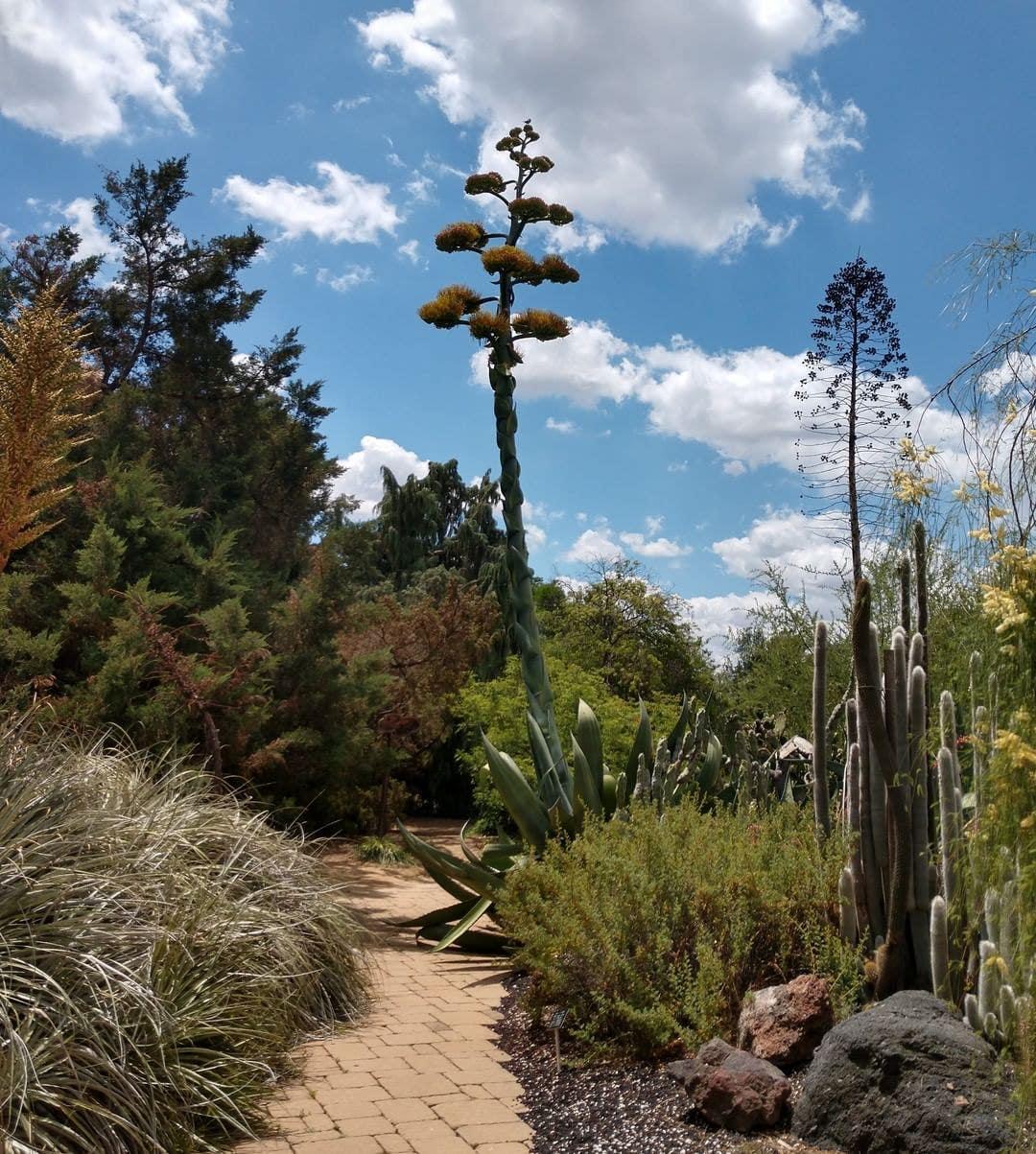 LA Arboretum Desert Garden