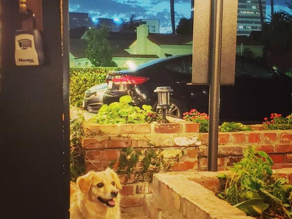 Dog on the patio at Tom Bergin's on Fairfax