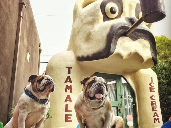 Bulldogs at Idle Hour in North Hollywood