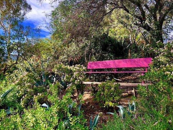 Pink bench hidden inside Amir's Garden in Griffith Park