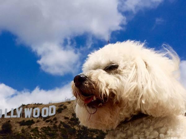 Main image for article titled Todos los Días son 'Día del Perro' en Los Ángeles