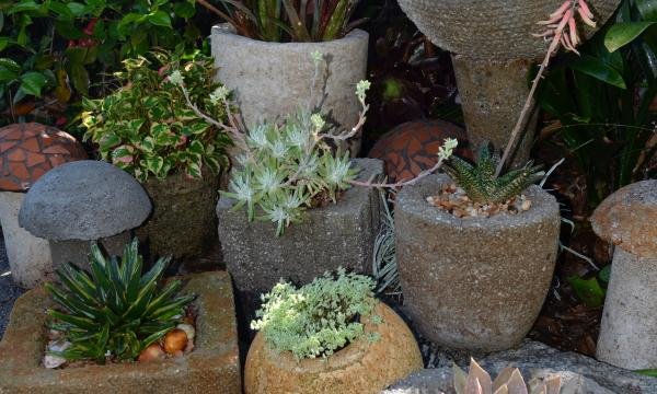 Potted plants against foliage