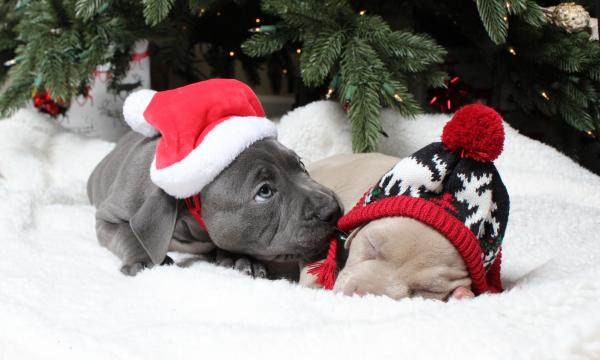 Cute puppies wearing winter hats