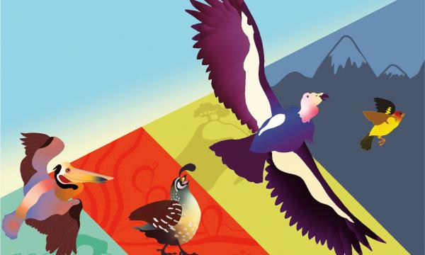 Graphic of four different kinds of birds flying through a background of changing colors and changing habitats, including ocean, desert, trees, and mountains.