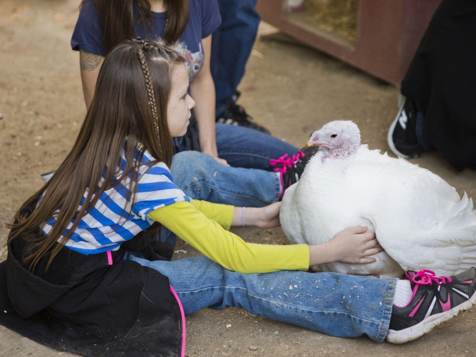 turkey at Gentle Barn