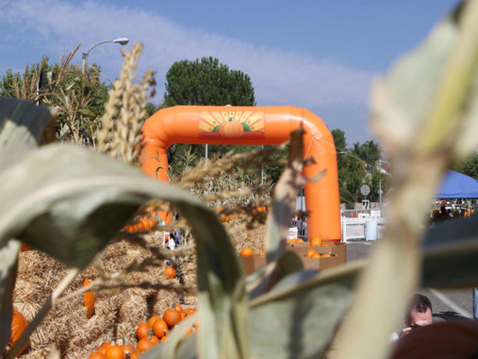 Main image for event titled Calabasas Pumpkin Festival