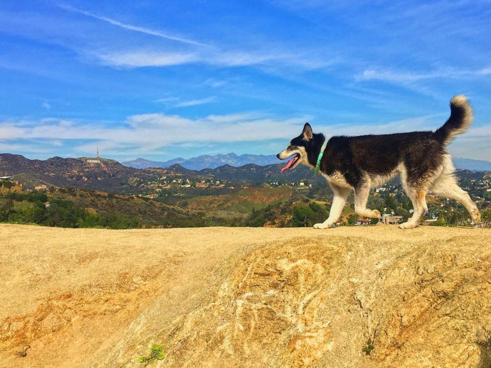 Dog hiking in Runyon Canyon