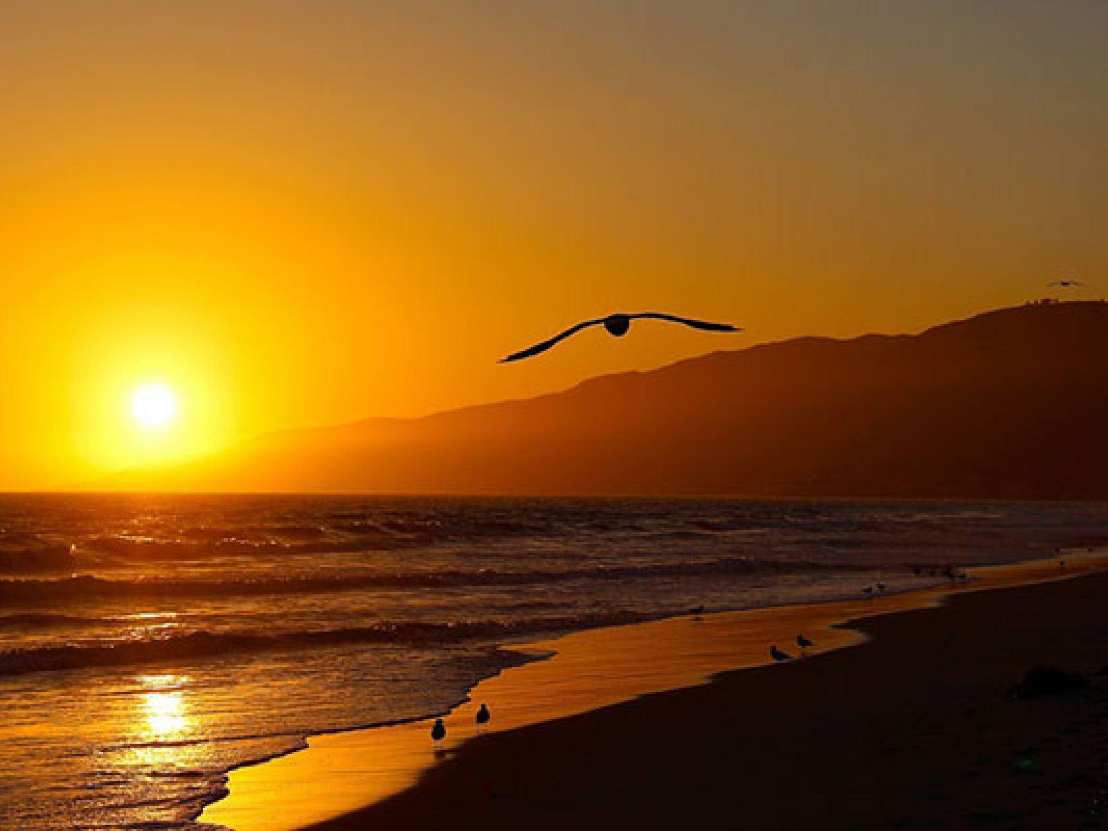 Main image for guide titled Les sept magnifiques : De la musique pour les meilleures plages de L.A.