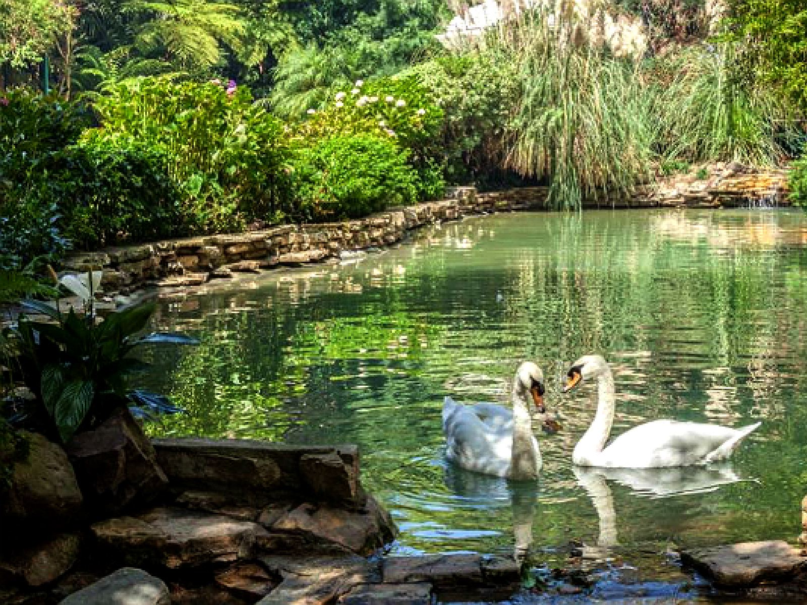 The famous swans of Hotel Bel-Air   Instagram by @hotelbelair