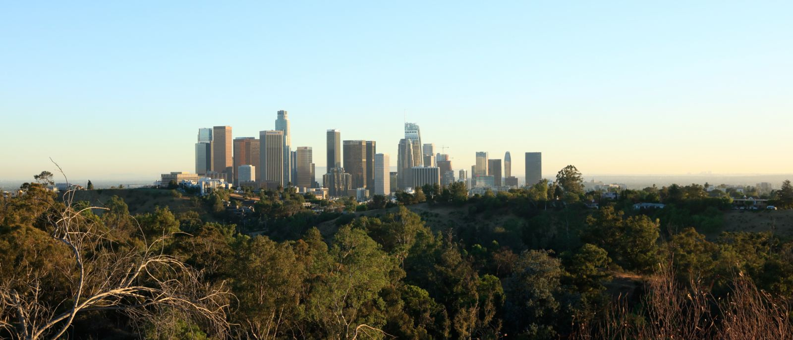 Downtown L.A. view from Elysian Park