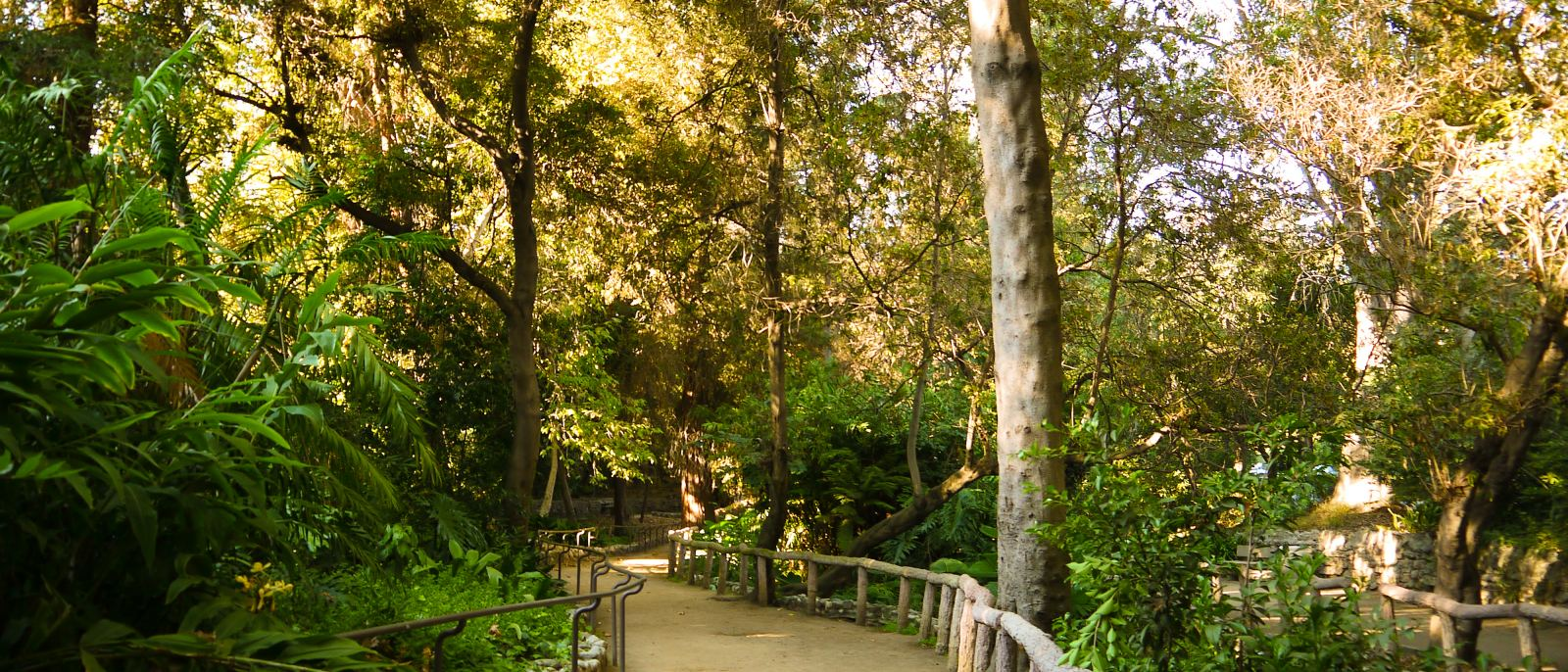 Fern Dell Nature Museum at Griffith Park