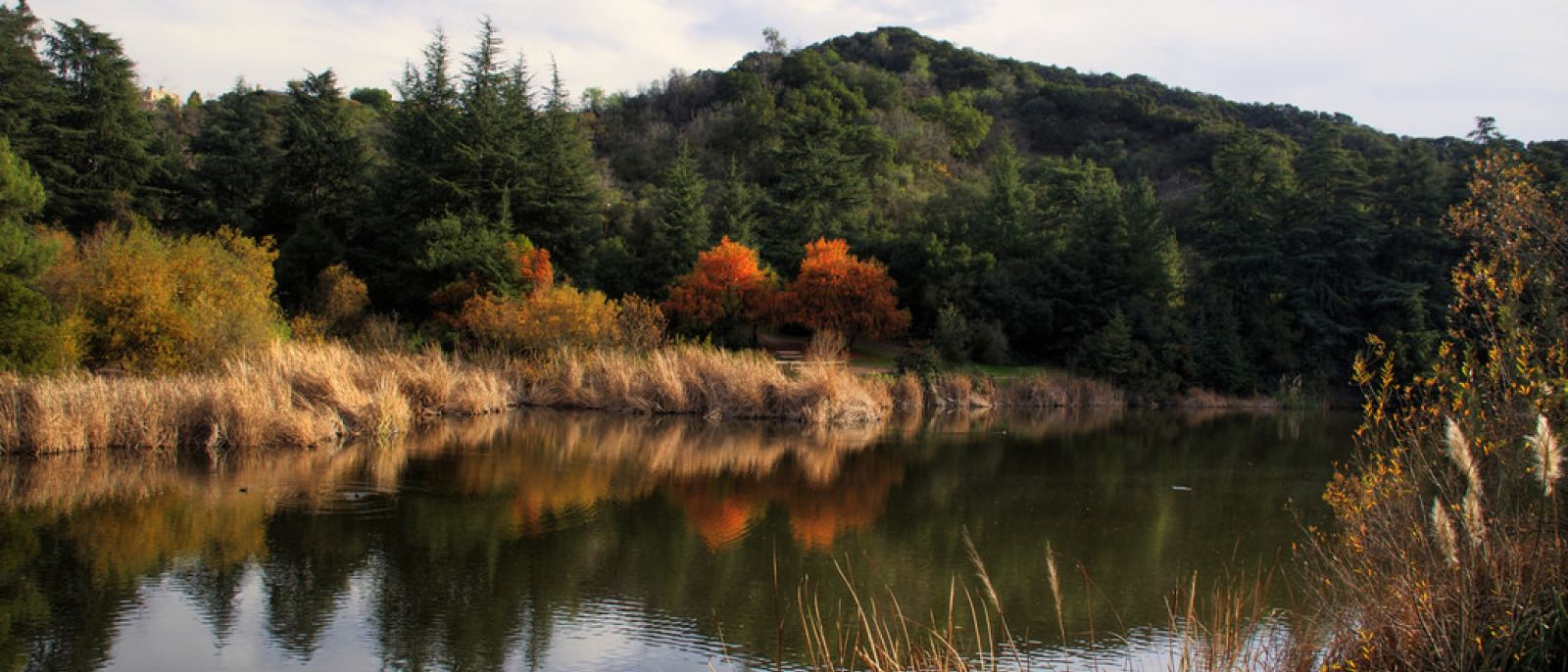 Franklin Lake at Franklin Canyon Park