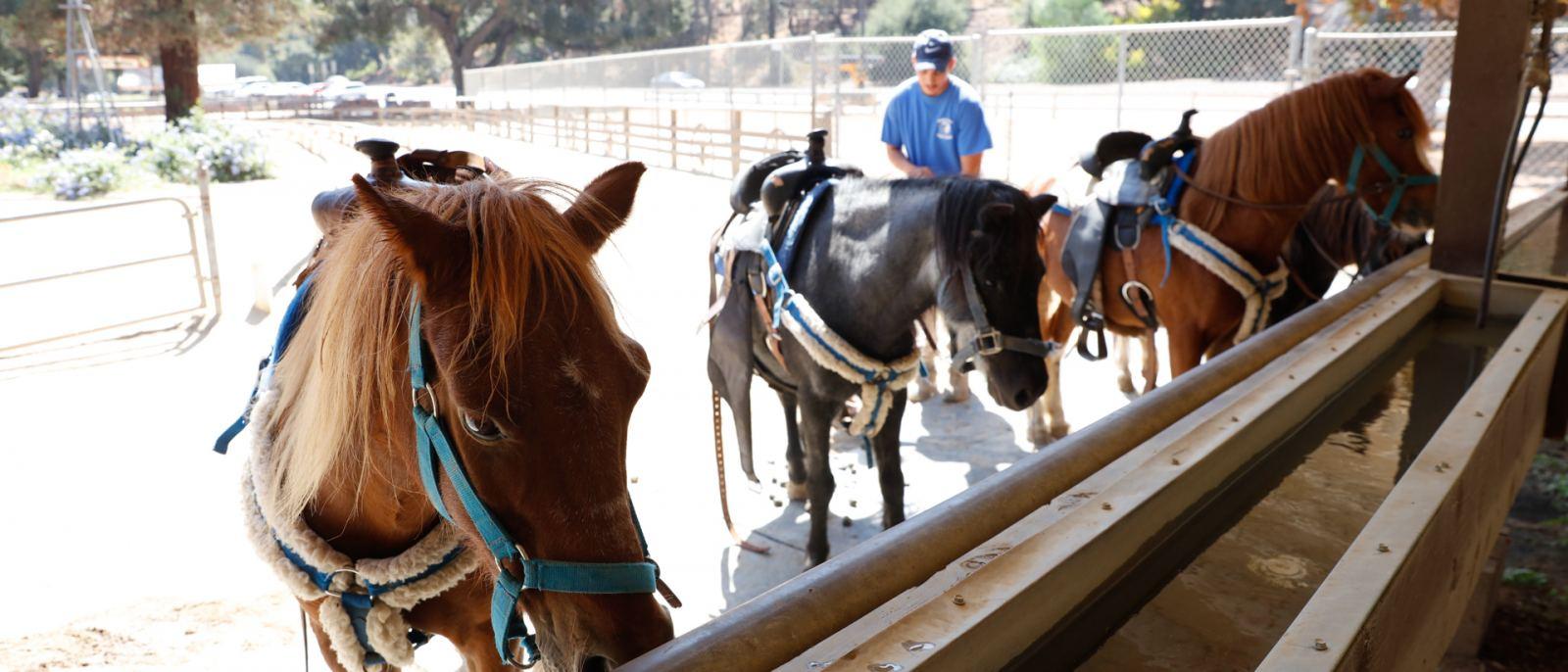 Griffith Park Pony Rides   |  Photo: Yuri Hasegawa