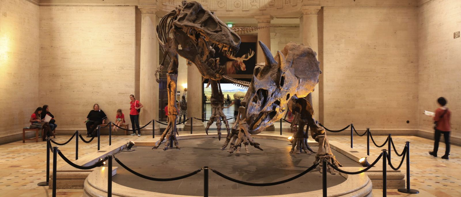 "The famous ""Dueling Dinos"" in the Grand Foyer of the Natural History Museum 