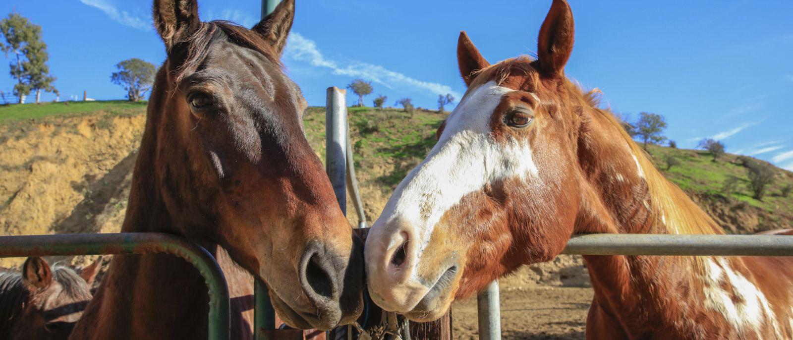 Horses at Sunset Ranch, Hollywood | Photo: Yuri Hasegawa