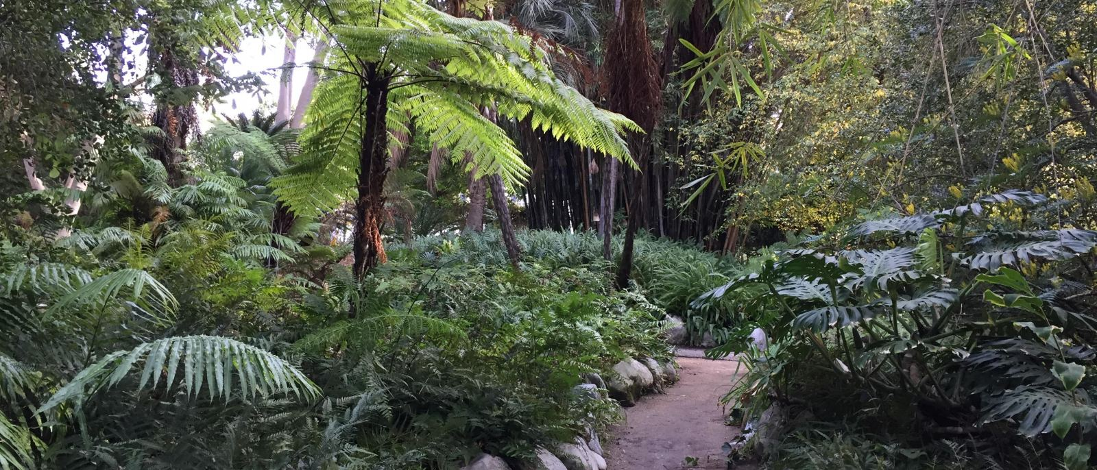 Mildred E. Mathias Botanical Garden at UCLA