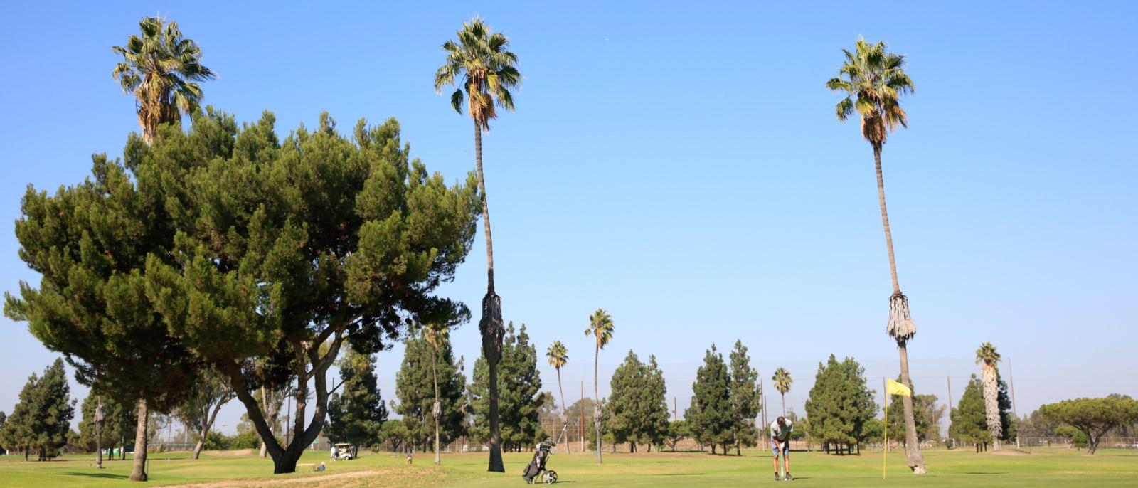 Alondra Golf Course golfer putting