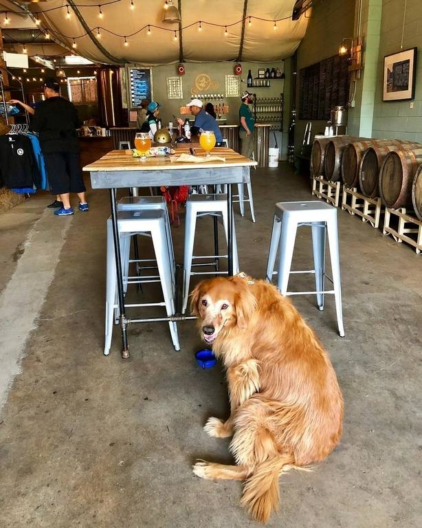 frogtown_brewery_dog