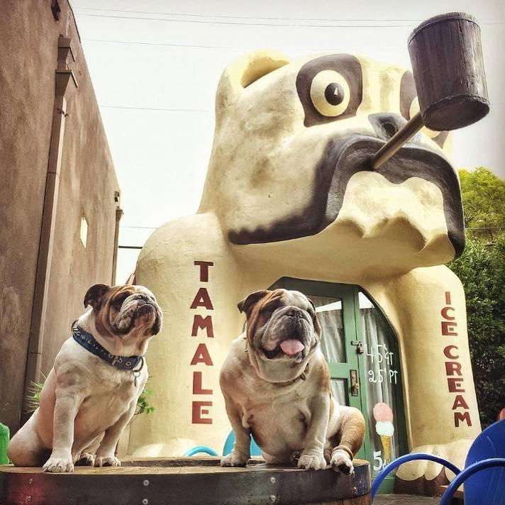 idle_hour_bulldog_cafe_bulldogs