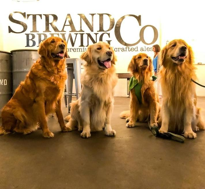 strand brewing dogs