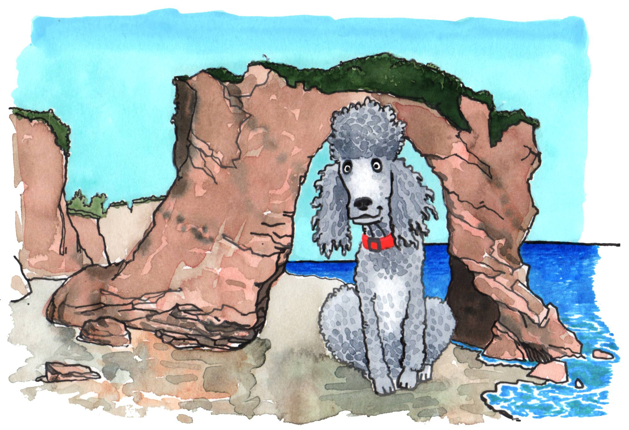 Standard Poodle in Malibu | Illustration by Max Kornell