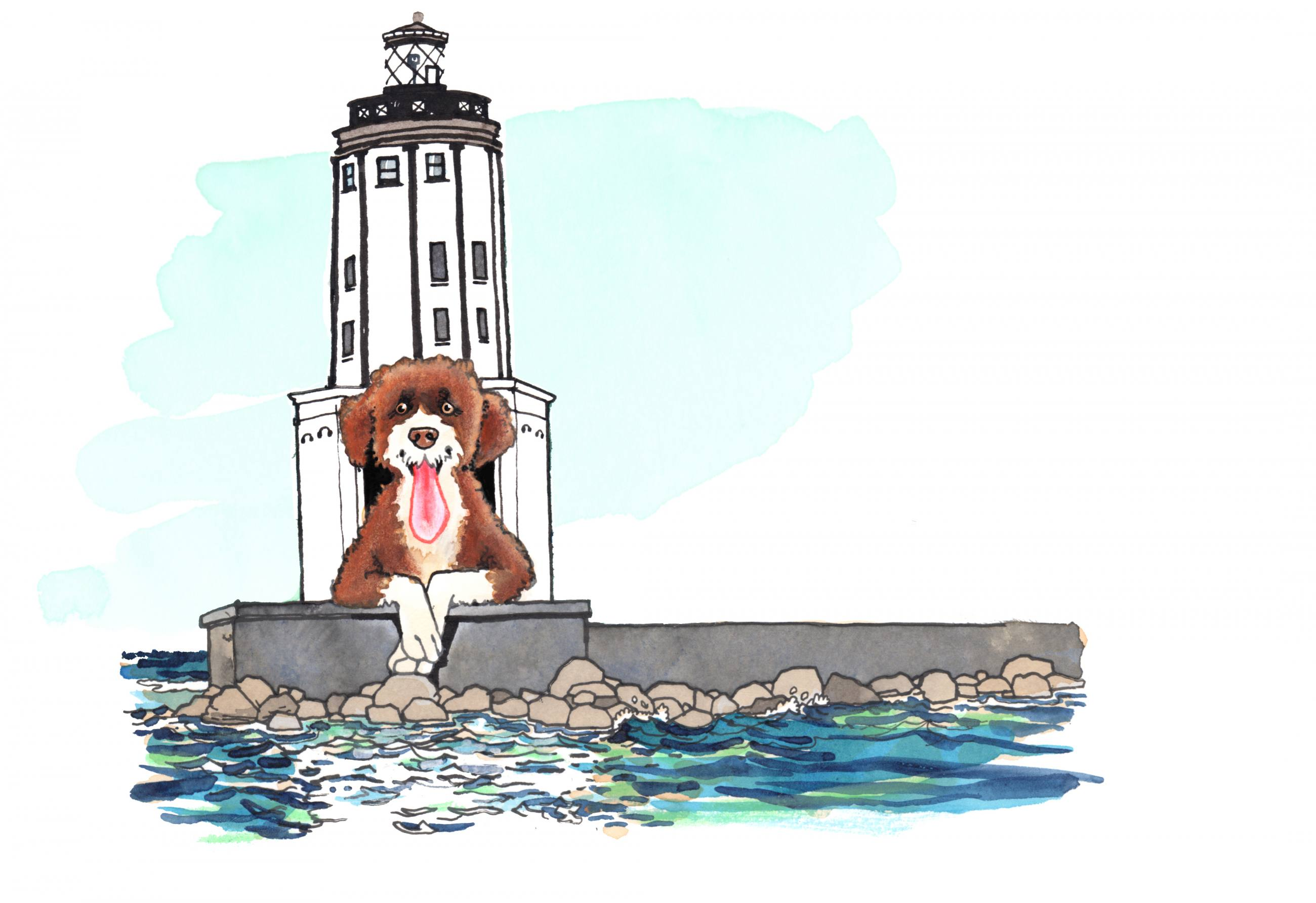 Portuguese Water Dog at Angels Gate Lighthouse in San Pedro | Illustration by Max Kornell