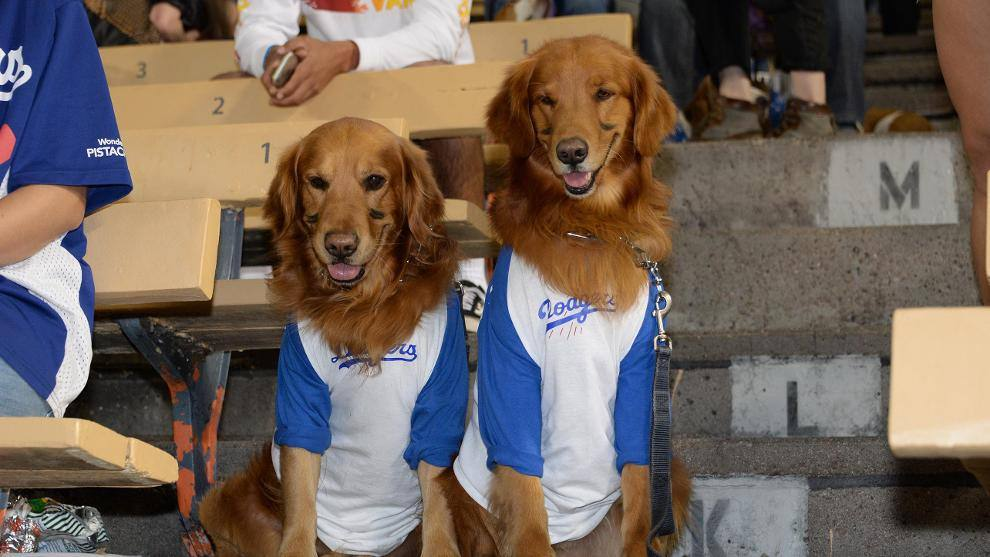 Dodger Stadium Pups at the Park