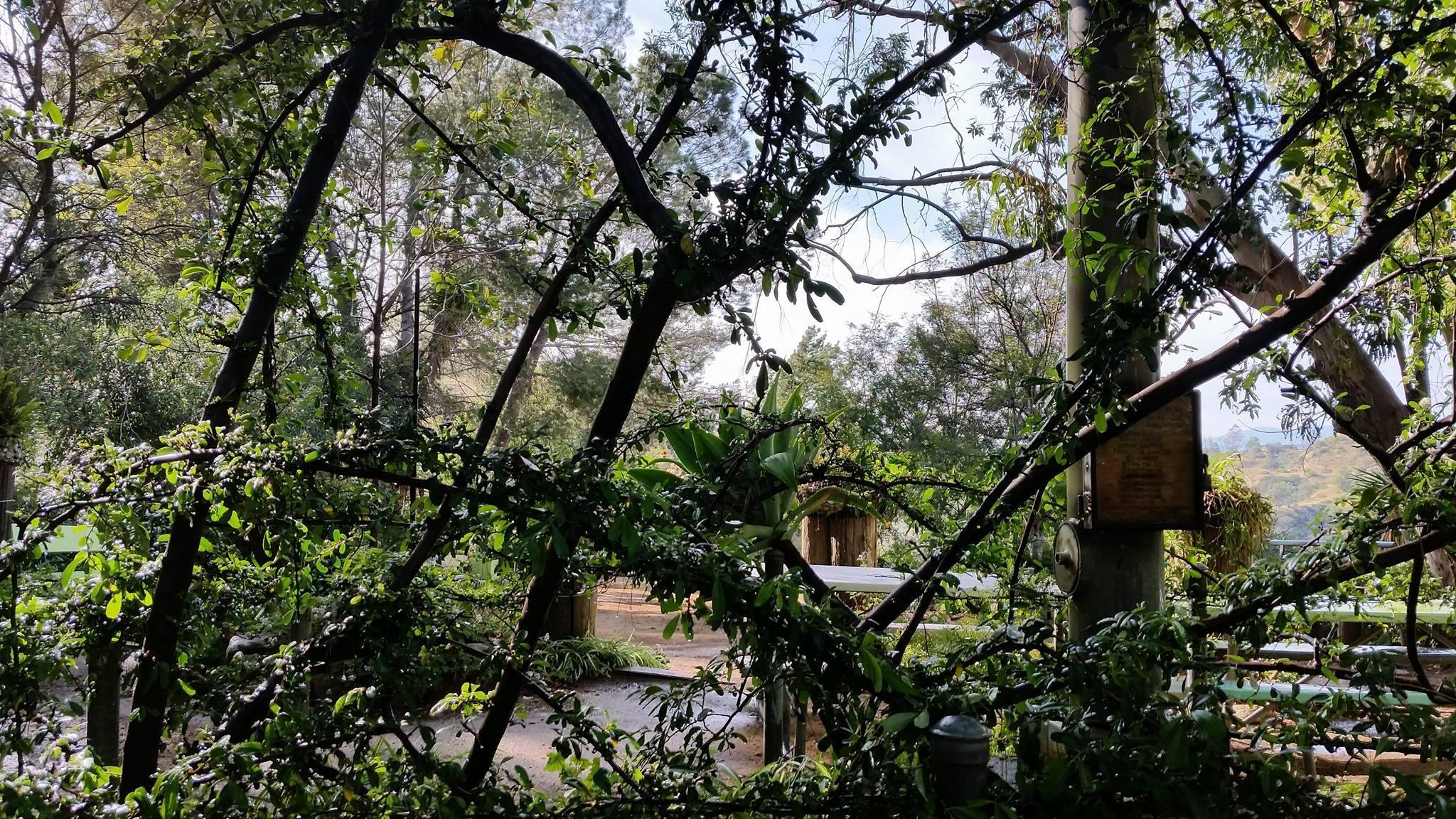 Amir's Garden tree branches