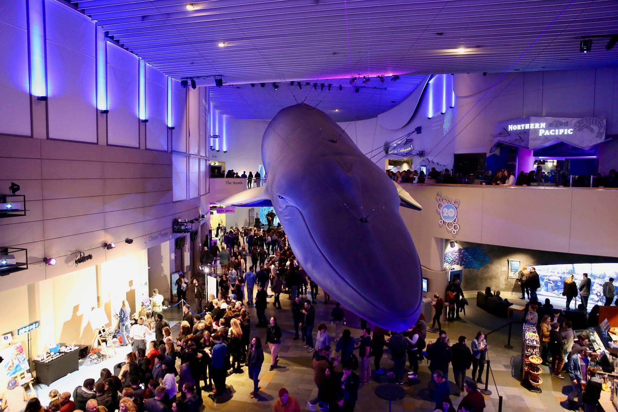 Night Dive at Aquarium of the Pacific | Photo: Aquarium of the Pacific, Facebook