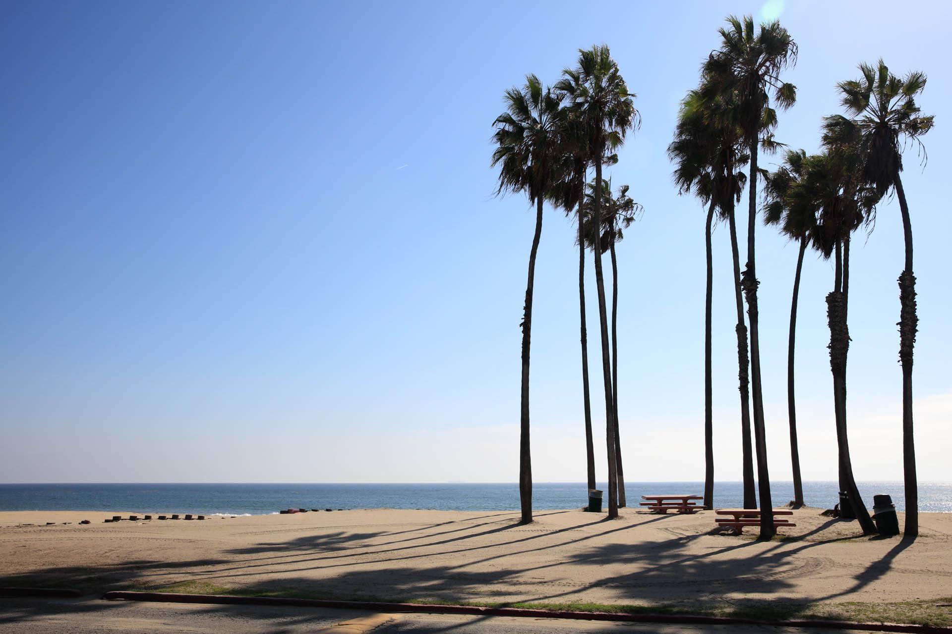Palm trees at Cabrillo Beach in San Pedro - los angeles locations