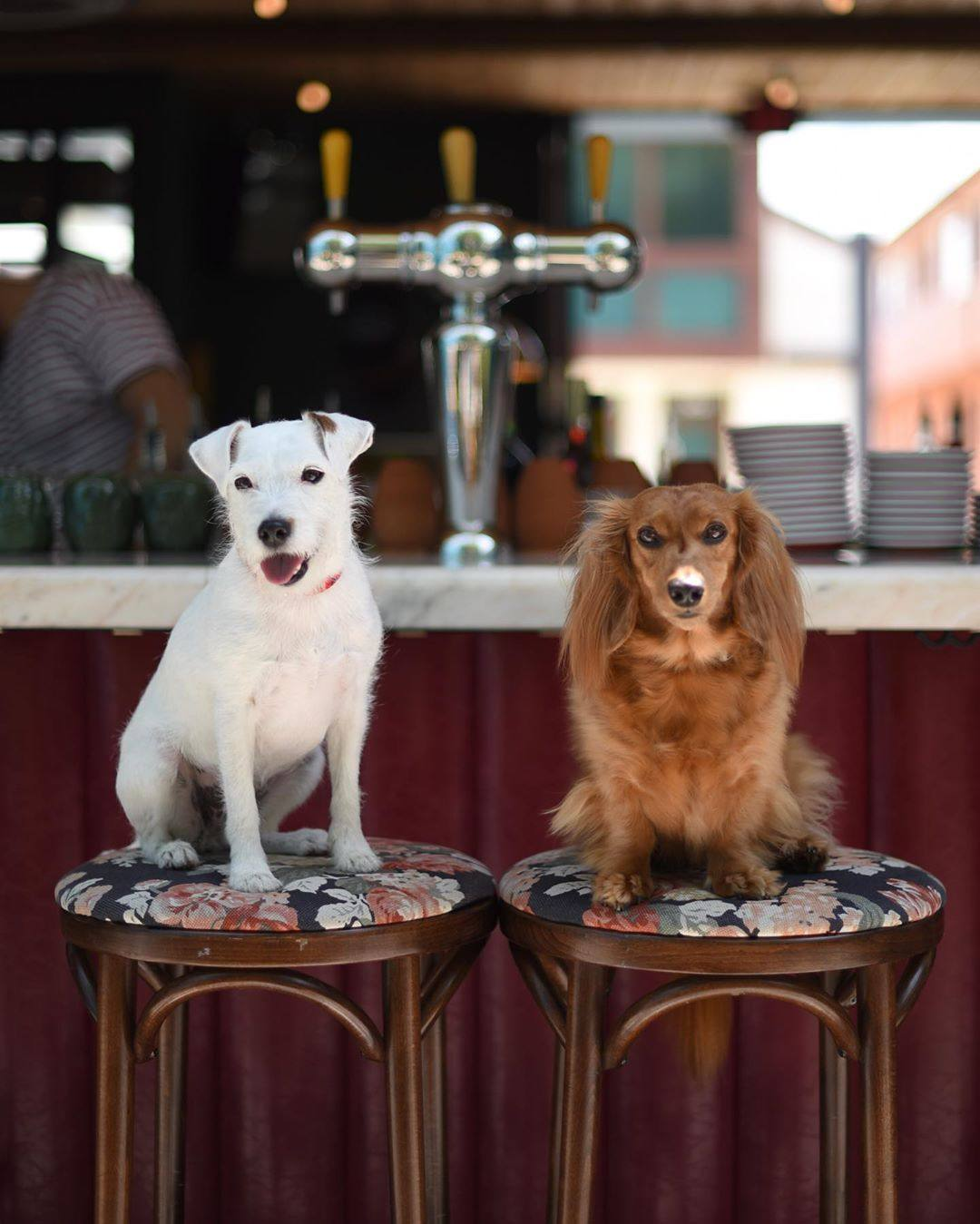 Django and Chloe enjoying Happy Hour at Simonette | Photo: @django_and_chloe, Instagram