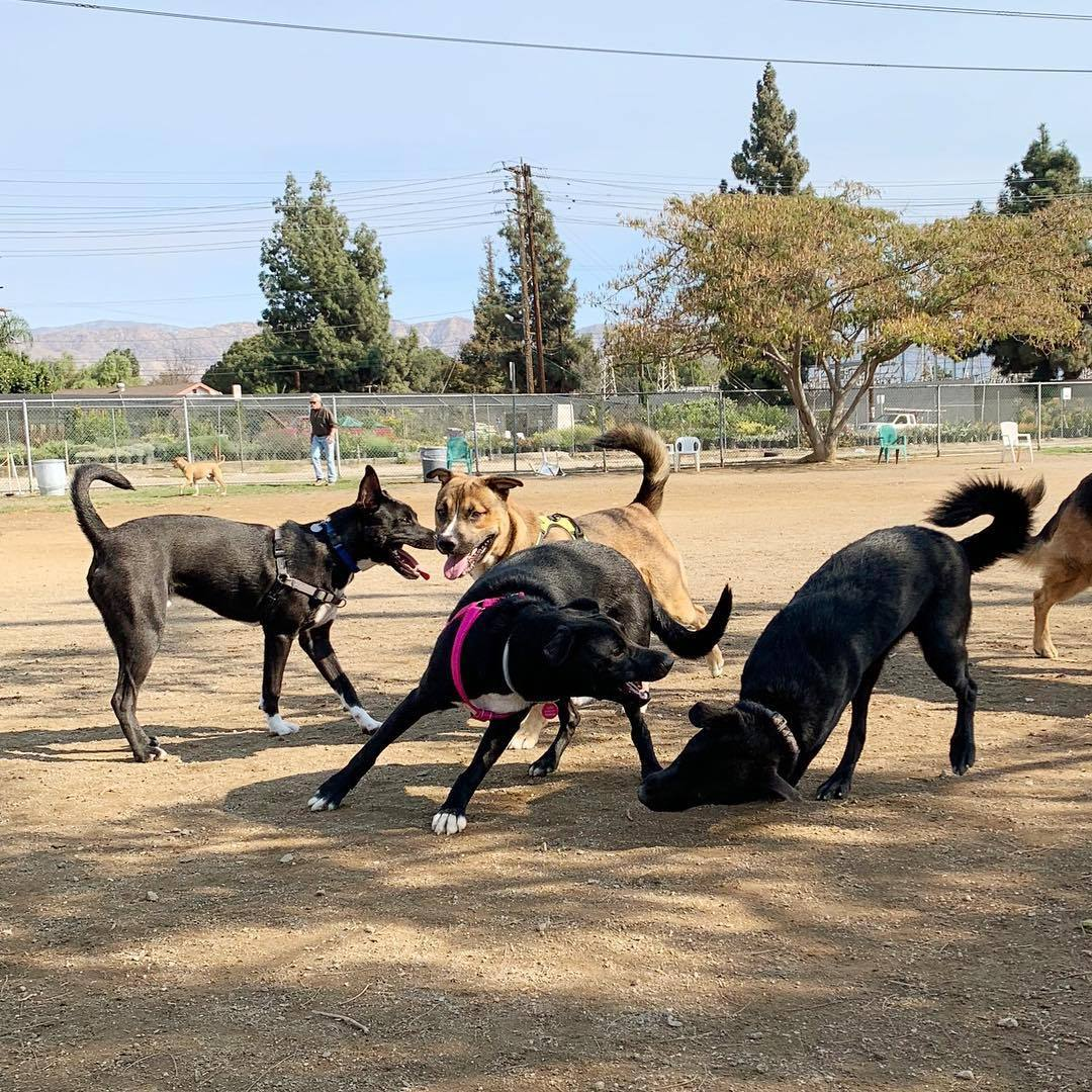 Whitnall Off-Leash Dog Park in North Hollywood