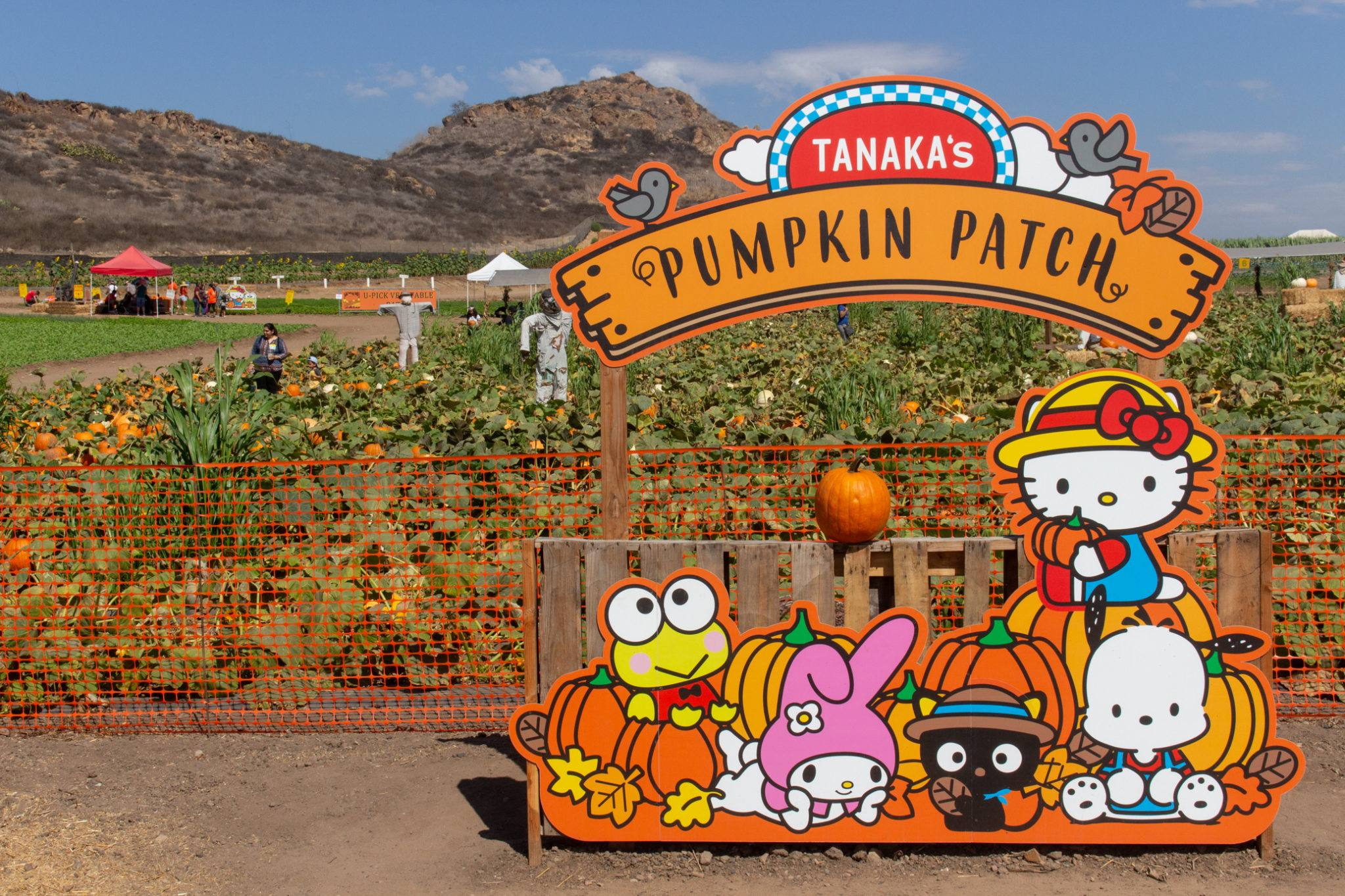 Hello Kitty Pumpkin Patch at Tanaka Farms in Irvine