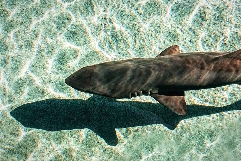 Aquarium of the Pacific Shark