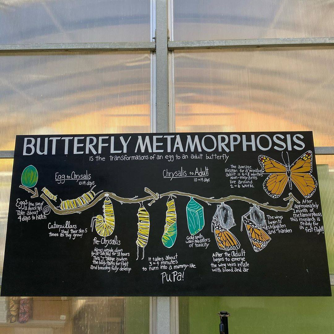 Butterfly Pavillion at NHMLA 2020