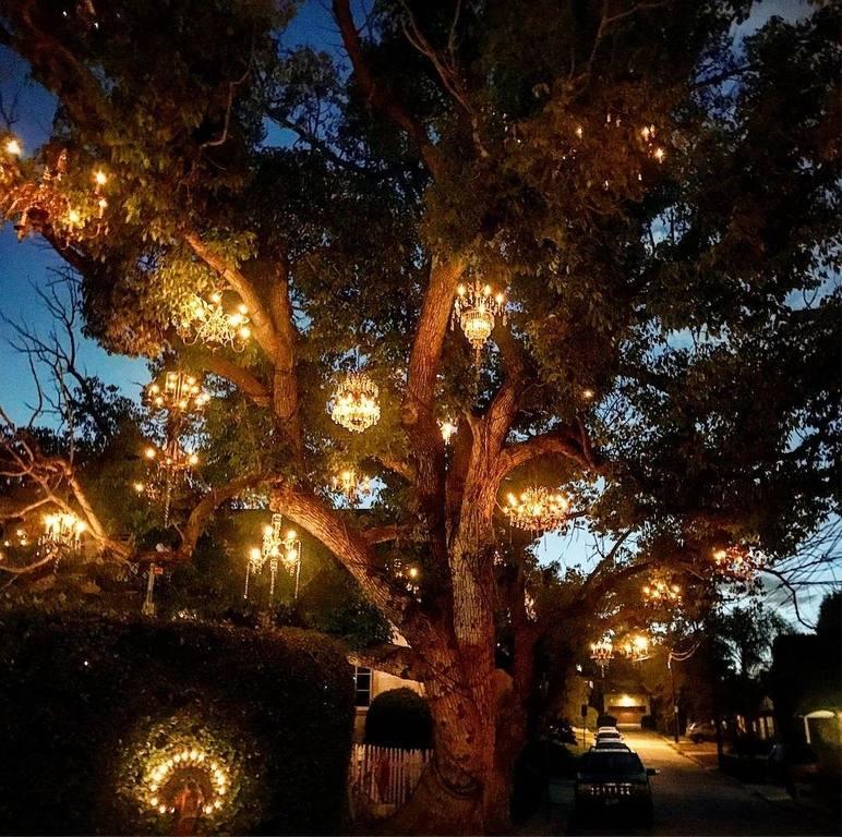 Chandelier Tree (Kronleuchter Baum)| Instagram von @maga7738