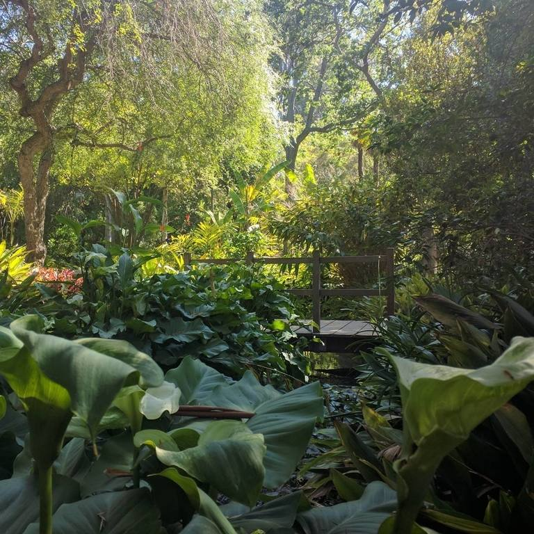 Mildred E. Mathias Botanical Garden à l'UCLA | Instagram by @bobbykrogstie