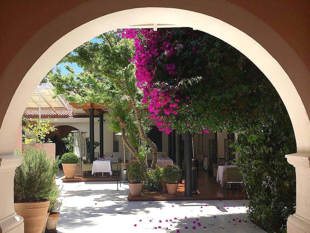 Bougainvillea in bloom at Hotel Bel-Air   Instagram by @hotelbelair