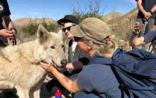 Hiking with Wolves at Wolf Connection