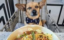 Pooch and pasta on the patio at Granville Pasadena