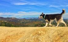 Dog hiking in Runyon Canyon